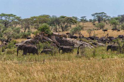 serengeti (2)