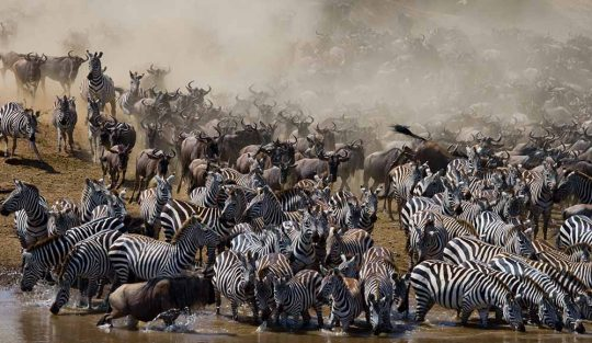 great migration 5